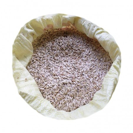 Kavılca Buğdayı (Kabuklu) 10 Kg. Devrekani Deva Gıda - 1
